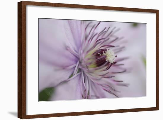 Clematis Flower Detail-Anna Miller-Framed Photographic Print