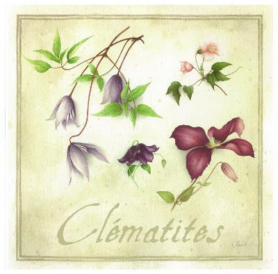 Clématites-Vincent Perriol-Art Print