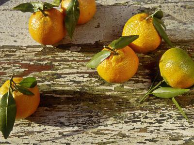 "Clementine Fruits & Leaves (Citrus Reticulata ""Clementine"")-Jacqui Hurst-Photographic Print"