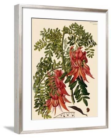 Clianthus Puniceus-S. Watts-Framed Giclee Print