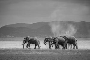 Amboseli Park,Kenya,Africa a Family of Elephants in Amboseli Kenya by ClickAlps