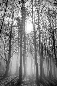 Sassofratino Reserve, Foreste Casentinesi National Park, Badia Prataglia, Tuscany, Italy by ClickAlps