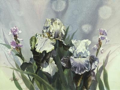 Hadfield Irises III