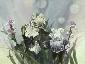 Hadfield Irises III by Clif Hadfield