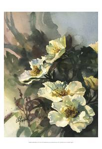 Hadfield Roses II by Clif Hadfield