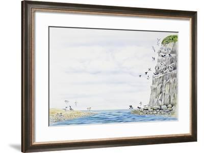 Cliff Environment Birds :Atlantic Puffin--Framed Giclee Print