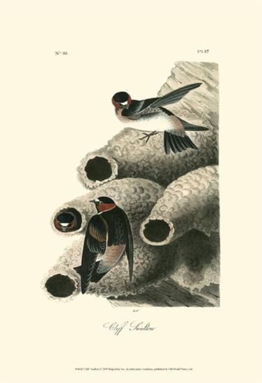 Cliff Swallow-John James Audubon-Art Print
