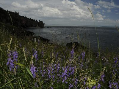 Cliffs and Flowers in the Bay of Fundy Area in Cape Breton-Karen Kasmauski-Photographic Print