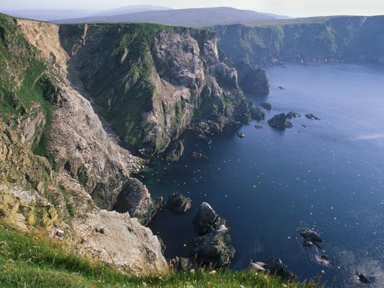 Cliffs of Hermaness National Nature Reserve, Unst, Shetland Islands, Scotland, UK-Patrick Dieudonne-Photographic Print