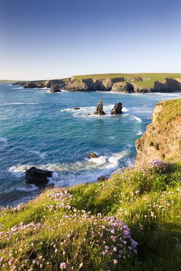 Clifftop View of Porthcothan Bay with Spring Wildflowers, Cornwall, England. Spring-Adam Burton-Photographic Print