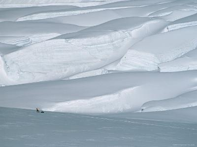 Climber in Denali Is Dwarfed by the Surrounding Snowy Landscape-Bill Hatcher-Photographic Print