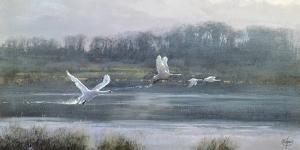 Morning Flight by Clive Madgwick