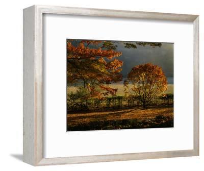 Arley Arboretum, Worcestershire - Evening Light Shining on Oak Trees