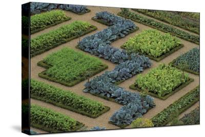 Cabbages and Chard Planted in Patterns in the Great Potager at the Chateau De Villandry, France