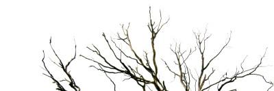 Branches on White Background