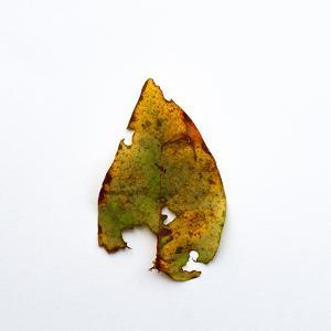 Decaying Leaf by Clive Nolan