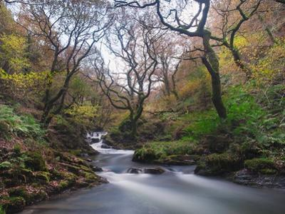 Stream Flowing Through Woodland in England by Clive Nolan