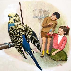 B Is for Budgerigars, Illustration from 'Treasure' by Clive Uptton
