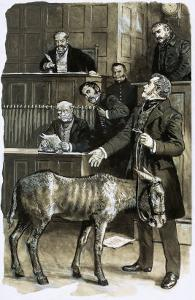 Richard Martin in Court with a Neglected Donkey by Clive Uptton