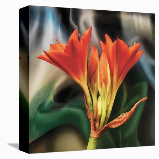 Clivia-Scott Peck-Stretched Canvas Print
