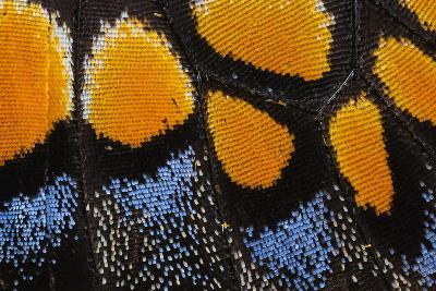 Close-Up Detail Wing Pattern of Butterfly-Darrell Gulin-Photographic Print