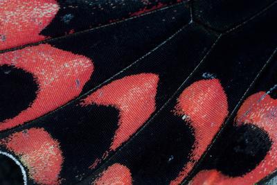 https://imgc.artprintimages.com/img/print/close-up-detail-wing-pattern-of-tropical-butterfly_u-l-q12t10l0.jpg?p=0