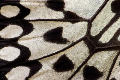 https://imgc.artprintimages.com/img/print/close-up-detail-wing-pattern-of-tropical-butterfly_u-l-q12t11o0.jpg?p=0