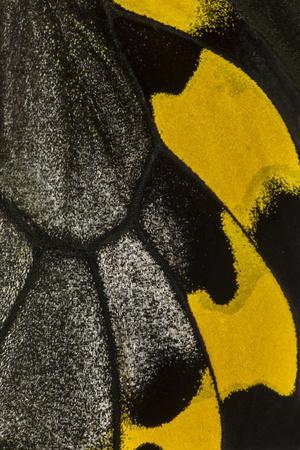 https://imgc.artprintimages.com/img/print/close-up-detail-wing-pattern-of-tropical-butterfly_u-l-q12t7120.jpg?p=0