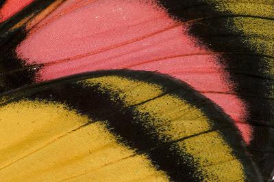 Close-Up Detail Wing Pattern of Tropical Butterfly-Darrell Gulin-Photographic Print