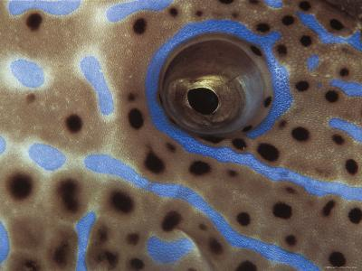 Close-Up Eye of Longtail Filefish, Indo-Pacific-Jurgen Freund-Photographic Print