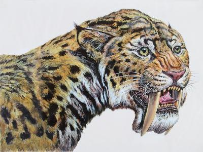Close-Up Headshot of Megantereon, Pliocene Epoch--Art Print
