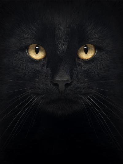Close-Up Of A Black Cat Looking At The Camera, Isolated On White-Life on White-Art Print