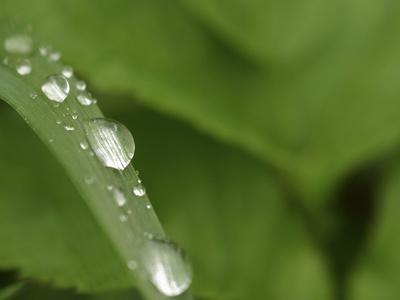 https://imgc.artprintimages.com/img/print/close-up-of-a-blade-of-grass-with-fresh-clear-water-droplets_u-l-q10x3eo0.jpg?p=0