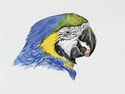Close-Up of a Blue-And-Yellow Macaw (Ara Ararauna)--Giclee Print