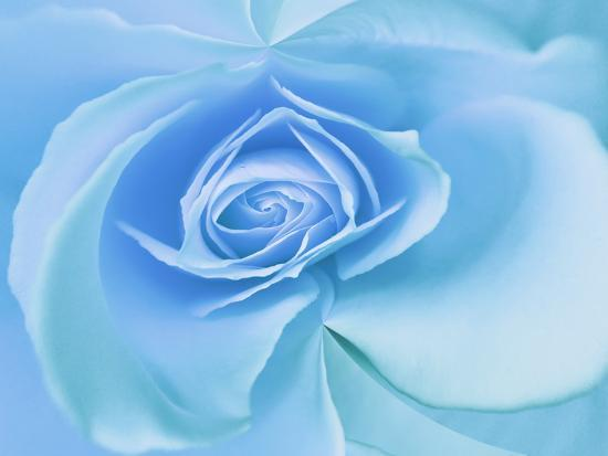 Close-Up of a Blue Rose-Adam Jones-Photographic Print