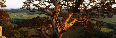 Close-Up of a Cedar Tree, Wisconsin, USA--Photographic Print