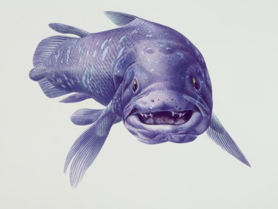 Close-Up of a Coelacanth--Photographic Print
