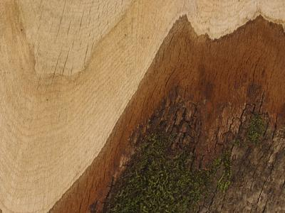 https://imgc.artprintimages.com/img/print/close-up-of-a-cut-log-with-rings-of-layers-and-mossy-bark_u-l-q10x2bz0.jpg?p=0