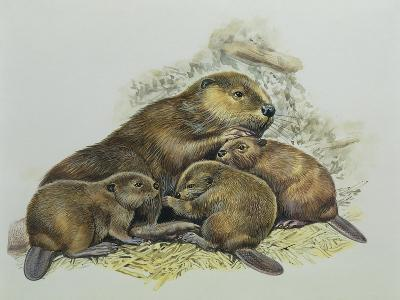 Close-Up of a Female Beaver Lying with its Young (Castor Fiber)--Giclee Print