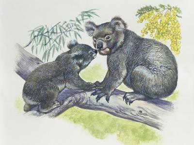 Close-Up of a Female Koala with a Joey (Phascolarctos Cinereus)--Photographic Print