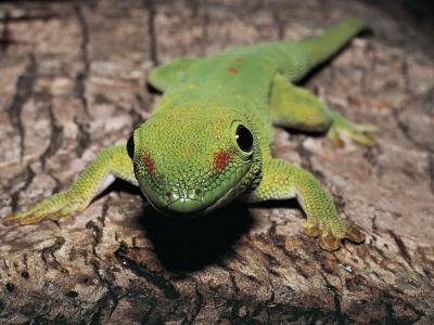 Close-Up of a Gecko on the Tree Trunk--Photographic Print