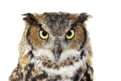Close-Up of A Great Horned Owl on White-Mirage3-Photographic Print