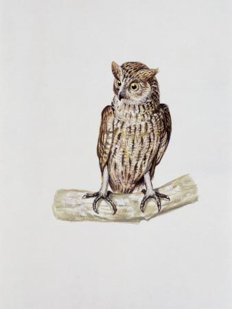 Close-Up of a Great Horned Owl Perching on a Branch (Bubo Virginianus)--Photographic Print