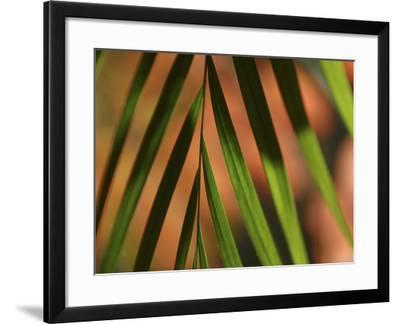Close-up of a Green Shadowy Palm Frond--Framed Photographic Print
