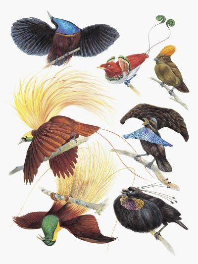 Close-Up of a Group of Birds--Giclee Print