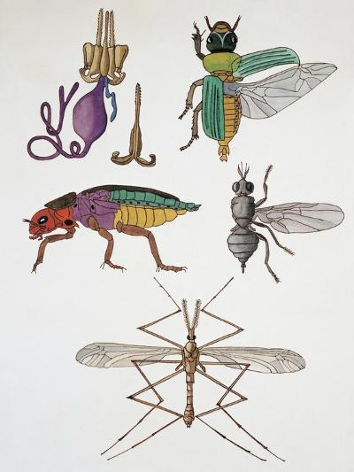 Close-Up of a Group of Hymenoptera Insects--Giclee Print