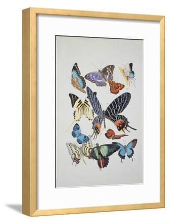 Close-Up of a Group of Lepidoptera Insects--Framed Giclee Print