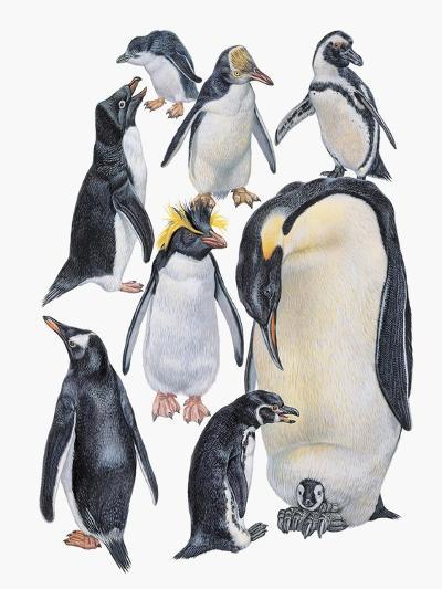 Close-Up of a Group of Penguins--Giclee Print