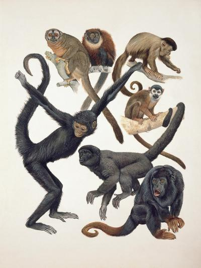 Close-Up of a Group of Primates--Giclee Print
