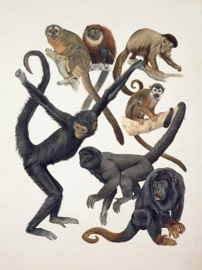 Close-Up of a Group of Primates--Photographic Print